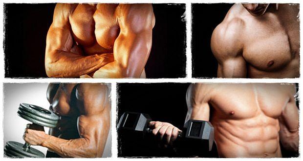l-building-muscle-mass2