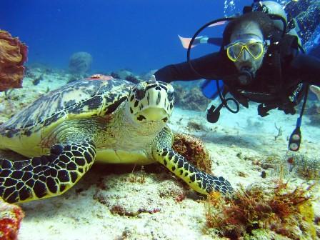 live-scuba-diving